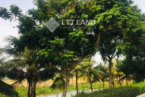 FPT-city-đà nẵng-lttland (19)