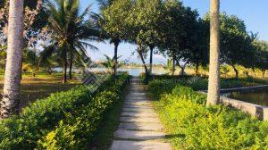 Con đường xanh đẫn vào khu biệt thự